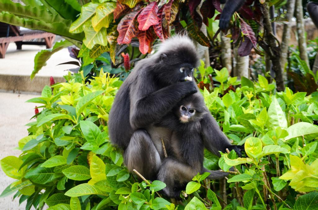Berjaya langkawi resort rainforest chalet
