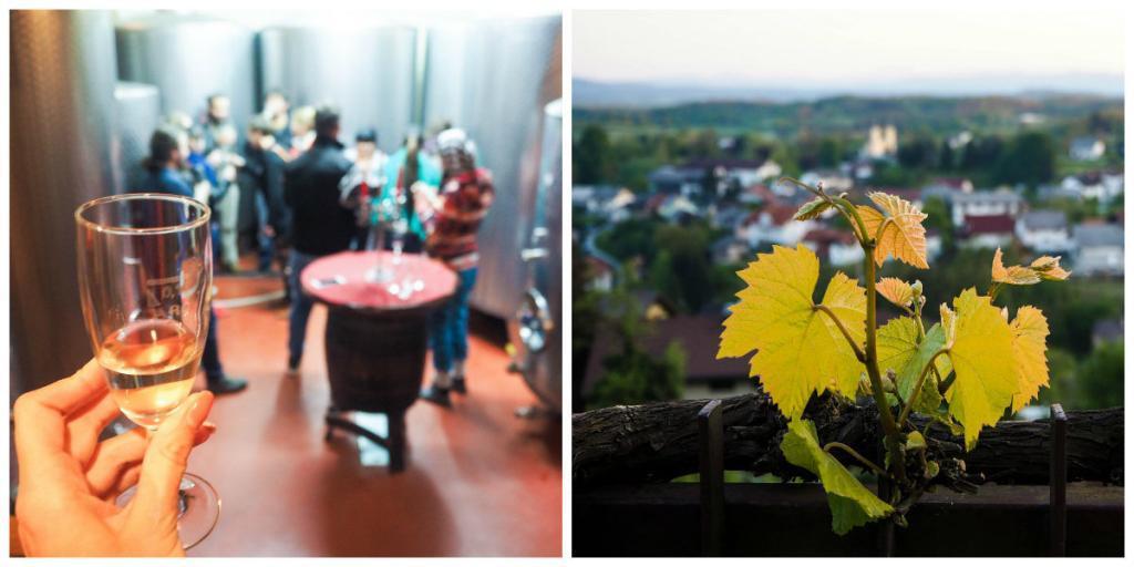 winecellar-slovenia-veronika-tomanova-via-veronikasadventure-com